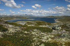 Hardangervidda, o maior planalto de montanha da Europa. Localizado na Noruega, tem clima sempre frio, semelhante ao clima alpino. Aqui se encontram as maiores geleiras da Noruega.   File:Hardangerviddaflora.jpg