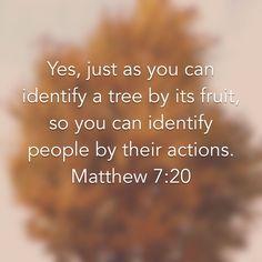 Matthew 7:20