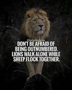 He is just a sheep herder watching over his family. Leo Quotes, Wolf Quotes, Strong Quotes, Attitude Quotes, Wisdom Quotes, True Quotes, Positive Quotes, Funny Quotes, Inspiring Quotes About Life