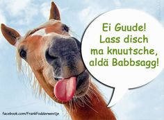 Humor, Lol, Funny, Animals, Twitter, Deutsch, Hessen, Funny Pics, Language