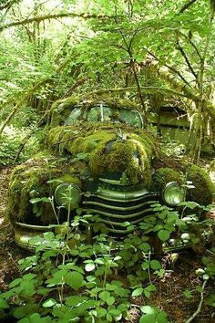 """'40s """"Green Car"""" covered in nature"""