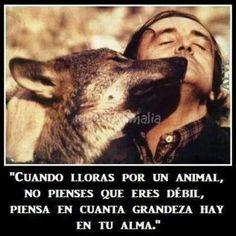 Amor a los animales