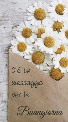buongiorno Italian Memes, Messages For Friends, Start The Day, Good Mood, Happy Day, Color Splash, Good Morning, Birthday Cards, Place Card Holders