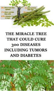 """Moringa has been hailed as a """"miracle tree"""" because it is a significant source of fats, proteins, carotenoids, vitamin C, iron, potassium, and other nutrients.  The flowers, roots, leaves, and bark of the tree have been used as nutritional supplements and are also used in the manufacture of cosmetics, perfumes, and skin oils."""