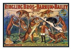 An poster sized print, approx mm) (other products available) - CIRCUS POSTER, <br>American poster, for Ringling Bros and Barnum & Bailey circus. - Image supplied by Granger Art on Demand - poster sized print mm) made in the UK Tiger Poster, A4 Poster, Poster Prints, Canvas Art, Canvas Prints, Art Prints, Ringling Circus, Cirque Vintage, Vintage Circus Posters