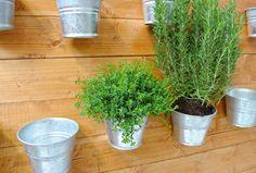 Orto sul balcone: costruire una parete per le erbe aromatiche