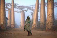 Malagasy girl walks among the Baobab trees