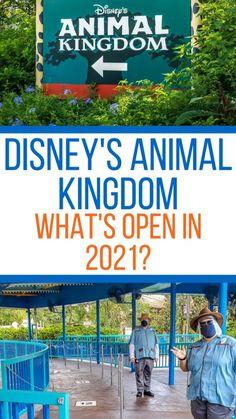 Disney World Guide, Disney World Vacation Planning, Orlando Vacation, Disney World Parks, Disney Planning, Disney Tips, Disney Resorts, Disney Vacations, Vacation Spots