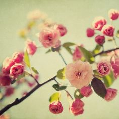 Spring Flower Photography - Romantic, Shabby Chic, Blossoms, Blooms, Pastel, Mothers Day, Easter - A Spring Gathering