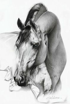 #horse drawing