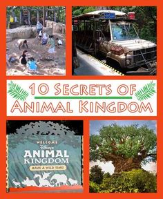 Bet you weren't aware of these insider secrets about Disney's Animal Kingdom!  #disney #disneysecrets