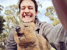 Chris Demarais Quokka selfie!