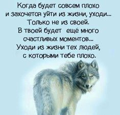 Brainy Quotes, Wise Quotes, Funny Quotes, Inspirational Quotes, Cool Words, Wise Words, Funny Happy Birthday Images, Russian Quotes, Clever Quotes