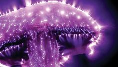 kirlian photography of people - Google Search