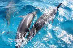 Dolphins in Fernando de Noronha, #Brazil