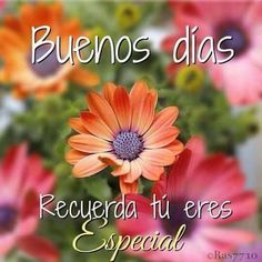 Discover recipes, home ideas, style inspiration and other ideas to try. Good Morning In Spanish, Good Morning Funny, Good Morning Messages, Good Morning Greetings, Morning Prayers, Morning Images, Happy Day Quotes, Hug Quotes, Good Day Quotes