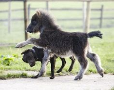"""""""Onward, furry friend! We are off to see great things!"""" """"Hey, watch the head, Marco Polo Pony."""""""