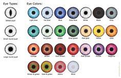 Different Colored Eyes Chart