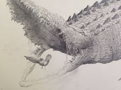 A crocodile sketch