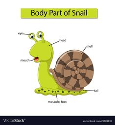 Diagram showing body part snail Royalty Free Vector Image - Diagram showing body part snail Royalty Free Vector Image - Preschool Poems, Preschool Learning Activities, Preschool Science, Preschool Worksheets, Listening Activities, Learn English Grammar, English Study, English Words, English Vocabulary