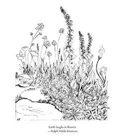 """Earth laughs in flowers."" - Ralph Waldo Emerson #QOTD #Gardening #Flowers #GreenPrints"
