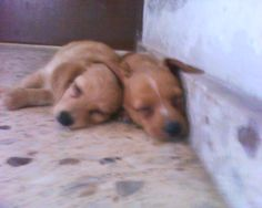 Lassy & Charly♥