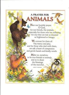 st francis prayer for animals Saint Francis Prayer, St Francis, Dog Quotes, Animal Quotes, Dog Heaven Quotes, Animal Pics, Beautiful Creatures, Animals Beautiful, Animals And Pets