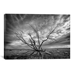 iCanvas 'Colorado Storm' by Dan Ballard Photographic Print on Canvas