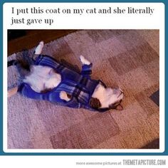 It's a straight jacket for your feline               ---E