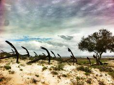 Praia do Barril em Tavira, Algarve