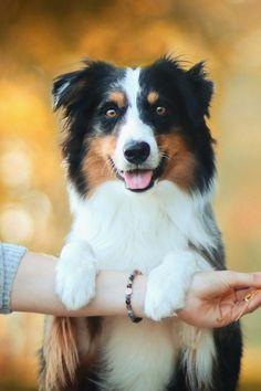 Dating-Seiten für Tierfreunde australia