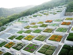 Flower garden of Awaji Yumebutai - I could never be this orderly.