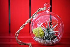 Amazon.com : 9GreenBox - Air Plant - Terrarium Kit with Moss and Pebbles : Live Indoor House Plants : Patio, Lawn & Garden