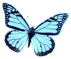 24 X Aqua Blue Turquoise Butterfly Edible Cupcake Topper Rice Wafer Paper B47
