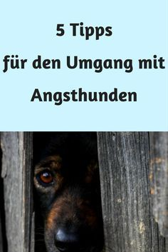 Hund Angst Training Erziehung Angsthund