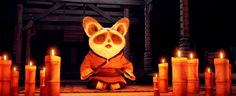 Discover & share this Kung Fu Panda GIF with everyone you know. GIPHY is how you search, share, discover, and create GIFs. Panda Gif, Panda Funny, Kung Fu Panda, Dreamworks, Disney Pixar, Funny Gifs, Hilarious, Master Shifu, Funny Animals