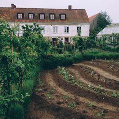 Dream Garden, Home And Garden, Yard Design, Modern Landscaping, Flower Farm, Urban Farming, Native Plants, Farm Life, Garden Inspiration