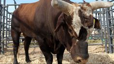 THEY'RE BACK: Bushwacker and Asteroid will be back this weekend in Tulsa!