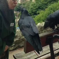 We met these Ravens today and the woman that looks after them keeps them at home. She has about 10 corvids and a lo…