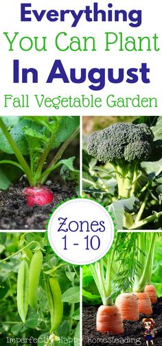 Vegetables Gardening Everything you can plant in August for a Fall Garden. - What seeds to plant in August for an awesome Fall garden. Zone 9 and 10 listed. Have your best vegetable garden ever! Veg Garden, Edible Garden, Veggie Gardens, Garden Club, Planting A Garden, Garden Tools, Gardening For Beginners, Gardening Tips, Gardening Shoes