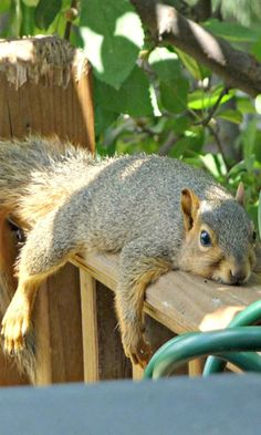 from nuts to nap time.....