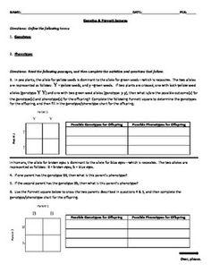 Genotypes and Punnett Square Worksheets | Genetics