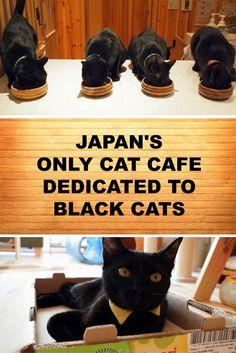 What to do in Himeji, Japan? You could visit Nekobiyaka, the only cat café in the world dedicated to black cats. Click here for story and lots of pictures of black cats: http://www.traveling-cats.com/2013/10/cats-from-himeji-japan.html (black cats, Japan, pictures of black cats, Himeji, Japan, Nekobiyaka)