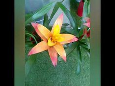 Χρωματιστές αρωματικές πινελιές-Chrisipap-Αρώματα και γεύσεις ζωής - YouTube Youtube, Plants, Flora, Youtubers, Plant, Youtube Movies