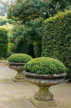 Love these big plant pots! Outdoor and Garden Decoration bestdecorationtips com is part of Boxwood garden Love these big plant pots! Outdoor and Garden Decoration - Boxwood Garden, Garden Urns, Garden Planters, Stone Planters, Cement Garden, Topiary Garden, Patio Plus, Garden Cottage, Garden Care