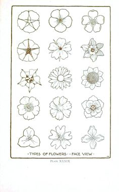 Vintage Printable at Swivelchair Media - Beta | Botanical – Flower – Flower line drawings 2