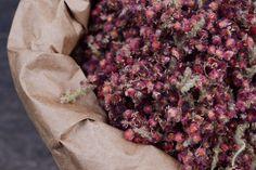 harvesting and processing wild staghorn sumac // Wayward Spark
