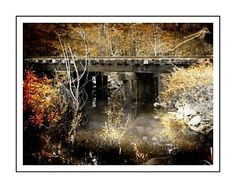 Photograph - Conway, South Carolina by Cindi Soutter Conway South Carolina, Framed Prints, Canvas Prints, Art Prints, Photography Institute, Pictures For Sale, New York Photography, My Photos, Art Pieces