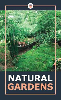 Some of the very best examples of highly evolved ecosystems are natural gardens, created and planted subtly and expertly by Mother Nature. Nurture a natural garden that's easy to look after and enjoy, and where nature is welcome, not pruned, weeded and fertilized out of existence. #naturalgardens #gardening #plantingguides Vertical Garden Plants, Vertical Garden Design, Shade Garden Plants, Succulent Landscaping, Landscaping Tips, Succulents Garden, Flower Gardening, Gardening Tips, Moss Garden