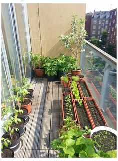 Balcony Herb Gardens, Apartment Patio Gardens, Small Balcony Garden, Balcony Plants, Indoor Garden, Balcony Ideas, Balcony Gardening, Roof Balcony, Small Balconies
